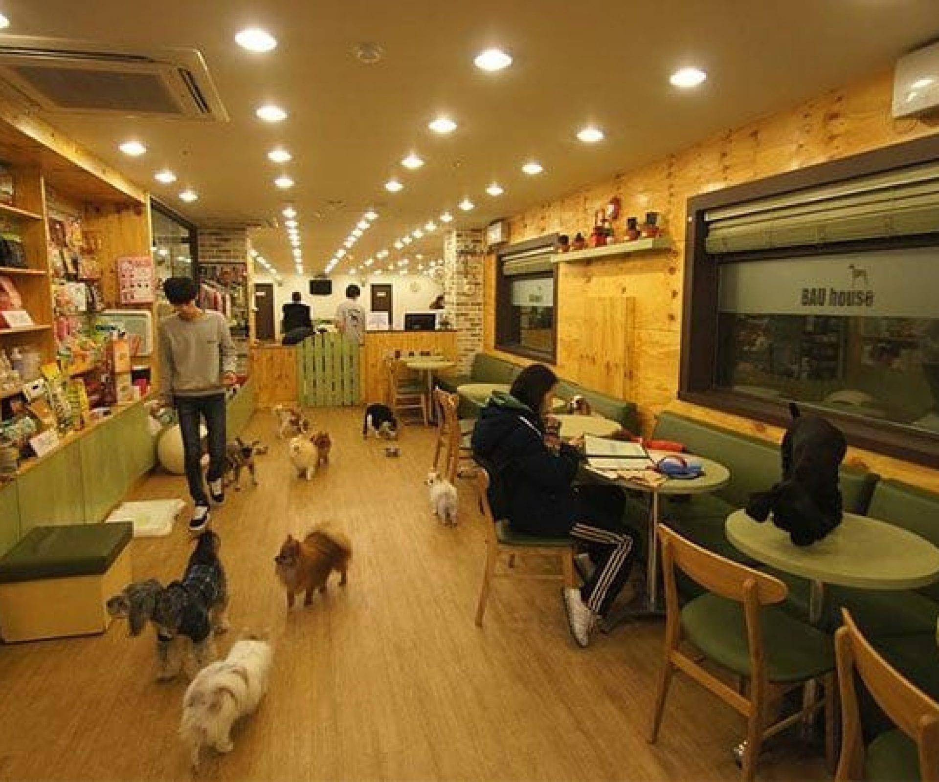 Bau House Dog Cafe   Mapo-gu, Seoul