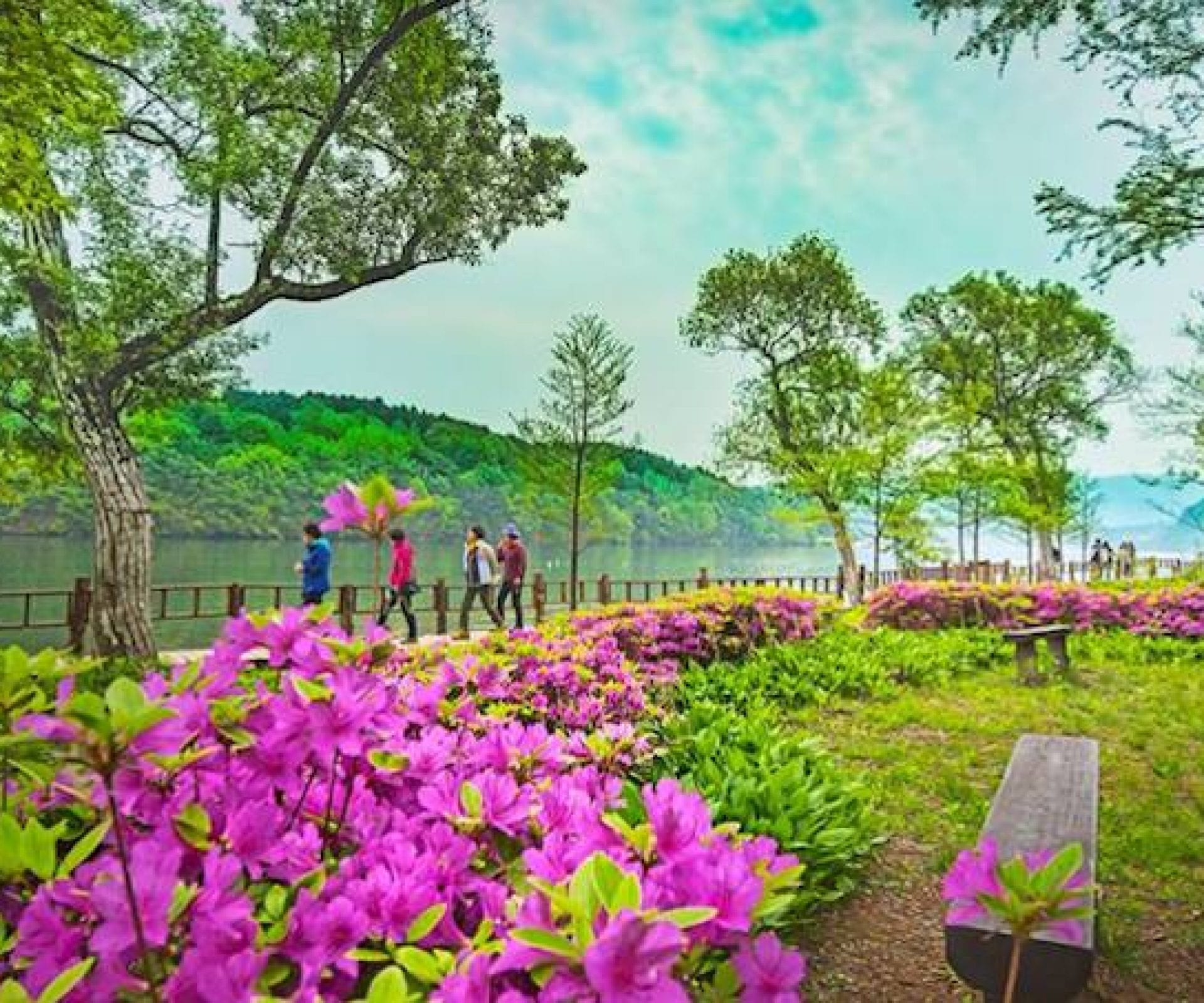 Nami Island | Chuncheon-si, Gangwon-do