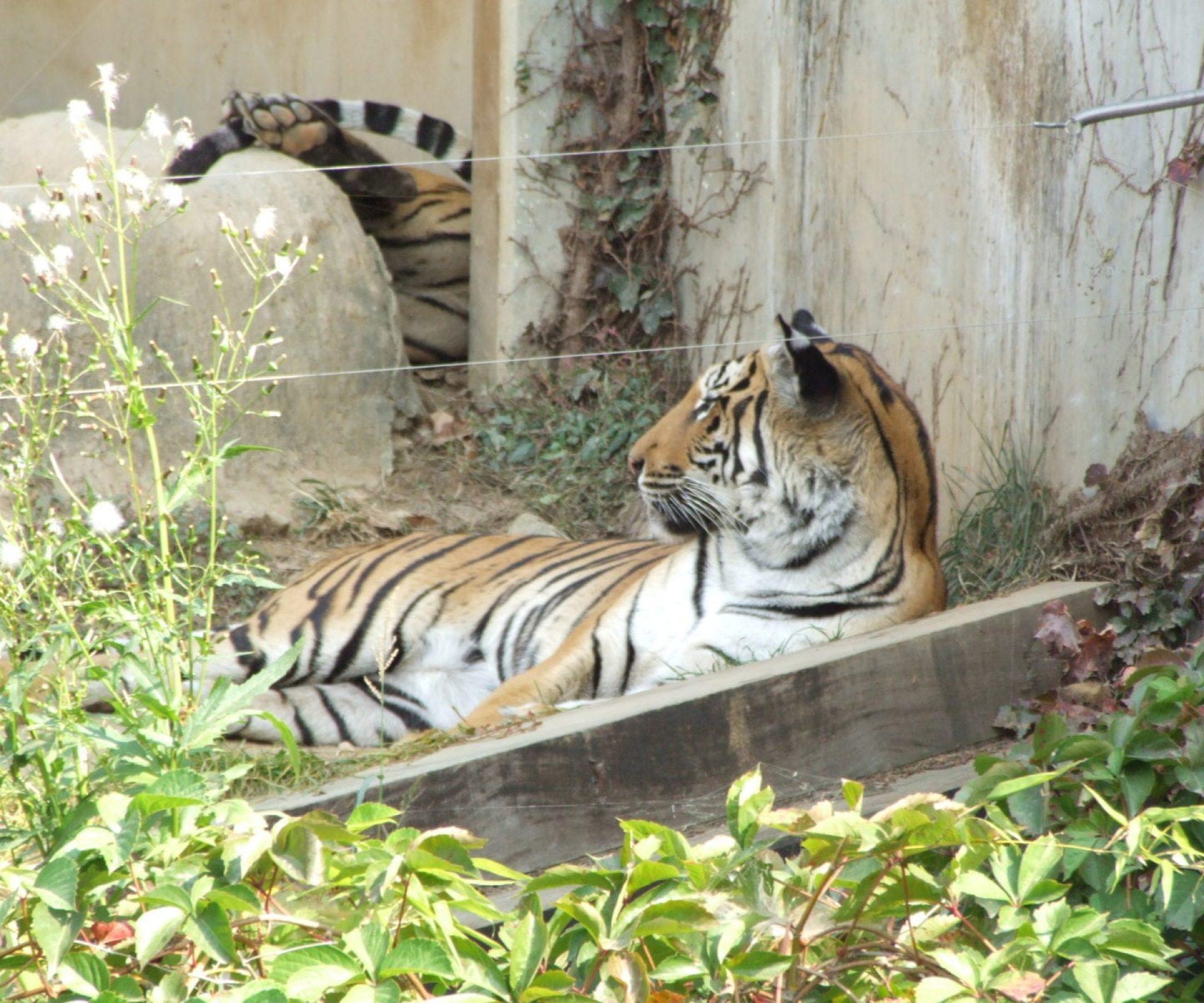 Seoul Grand Zoo | Gwacheon-si, Gyeonggi-do