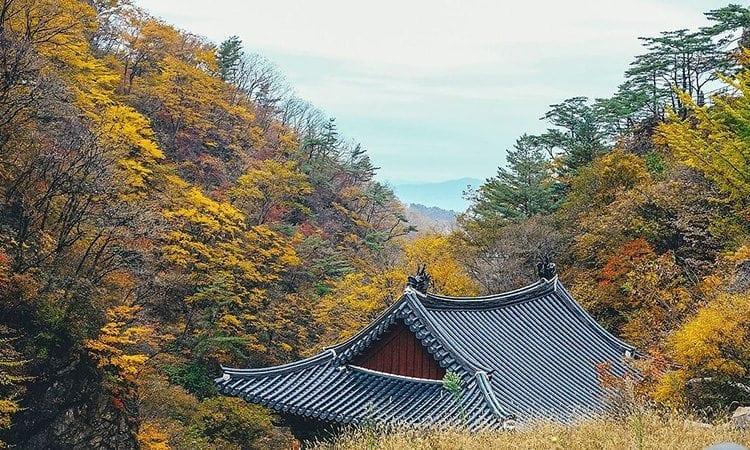 Chiaksan Mountain | Weonju-si, Gangwon-do