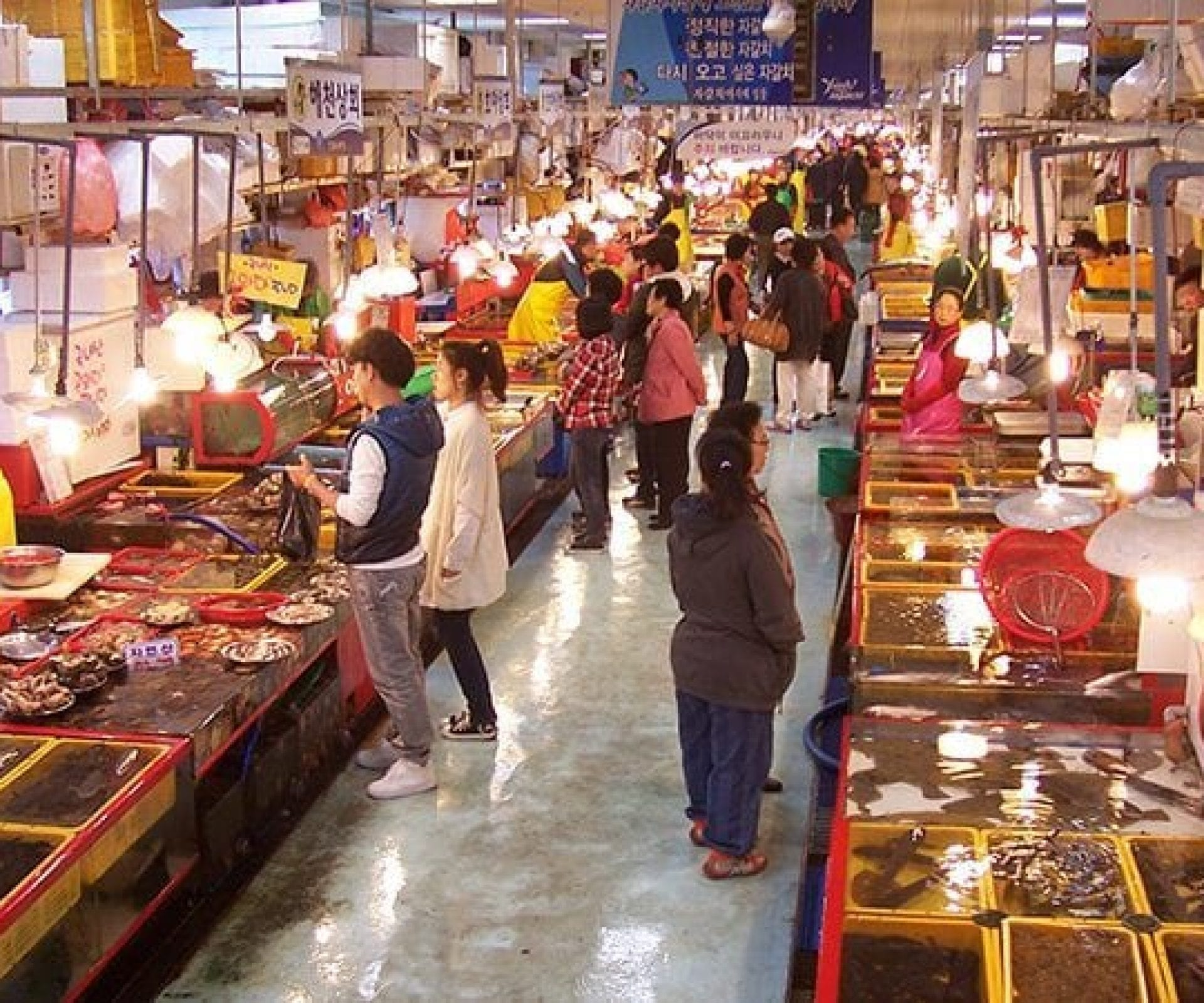 Jagalchi Fish Market | Jung-gu, Busan