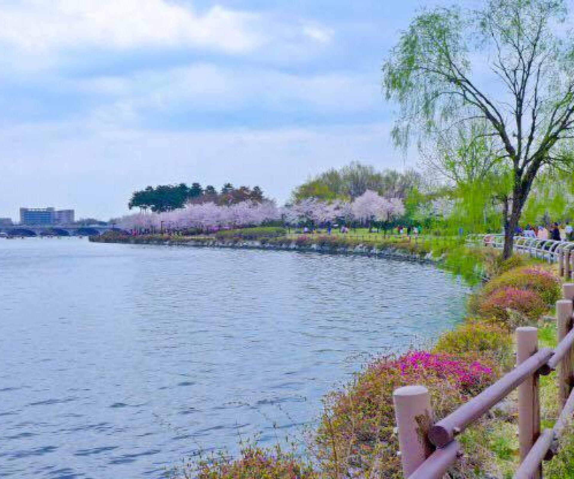 Ilsan Lake Park (일산호수공원)   Goyang-si, Gyeonggi-do