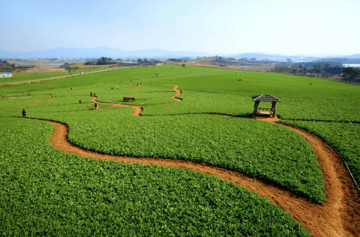 Borinara Hagwon Farm | Gochang-gun, Jeollabuk-do