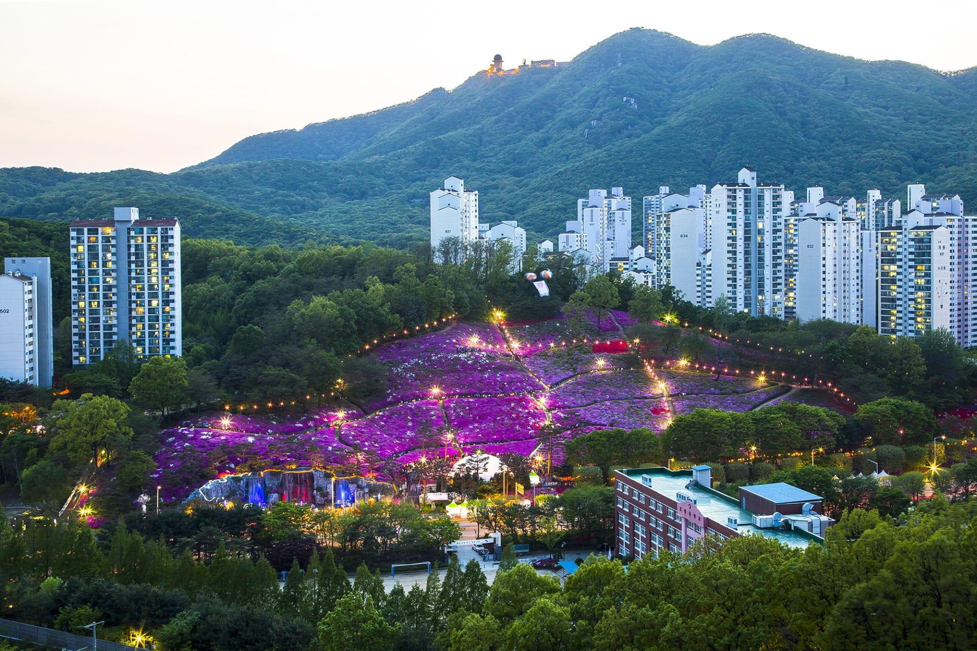 gunpo royal azalea festival 2019