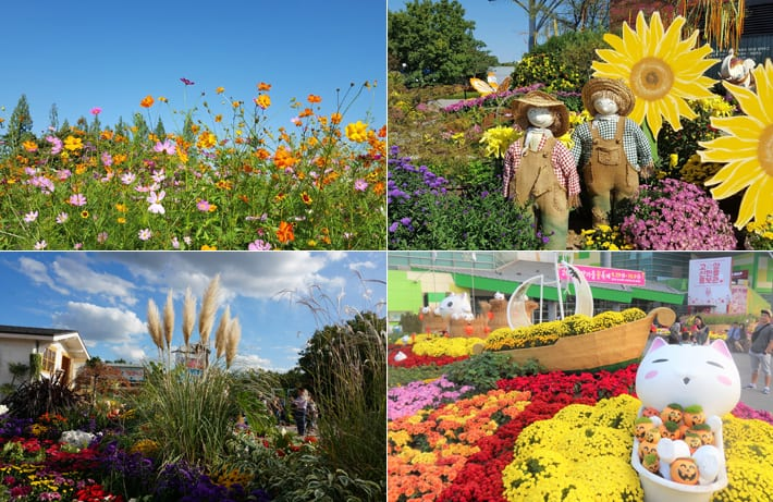 Goyang Autumn Flower Festival | Goyang-si, Gyeonggi-do