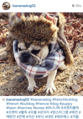 1. Fall accessories for all, adorable dog sold separately.