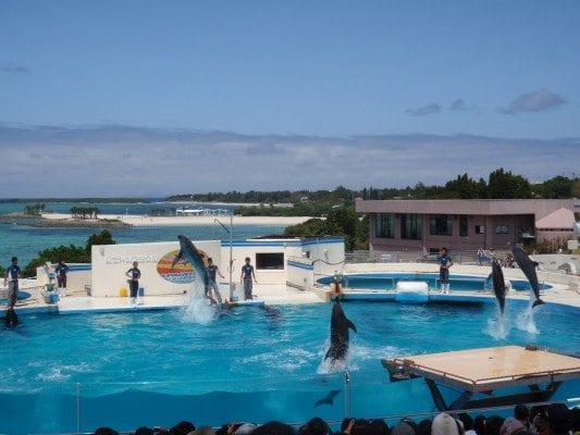 Dolphin show at the Okichan theater in Churaumi aquarium