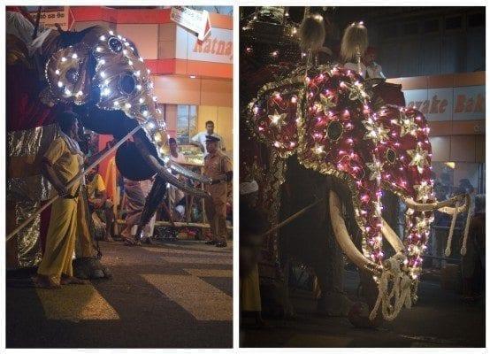 Dual Elephants