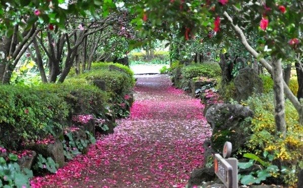 Best Places In Geoje Jisimdo (Camellia) Island