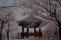 unique-ways-to-enjoy-korea-in-spring
