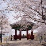 things to do in south korea this march
