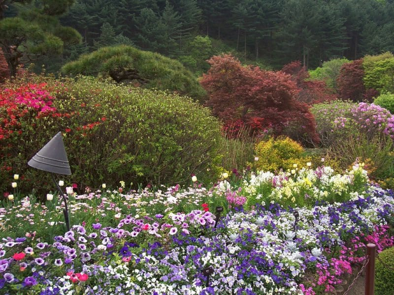 Day Trips to Take Outside of Seoul garden of the morning calm