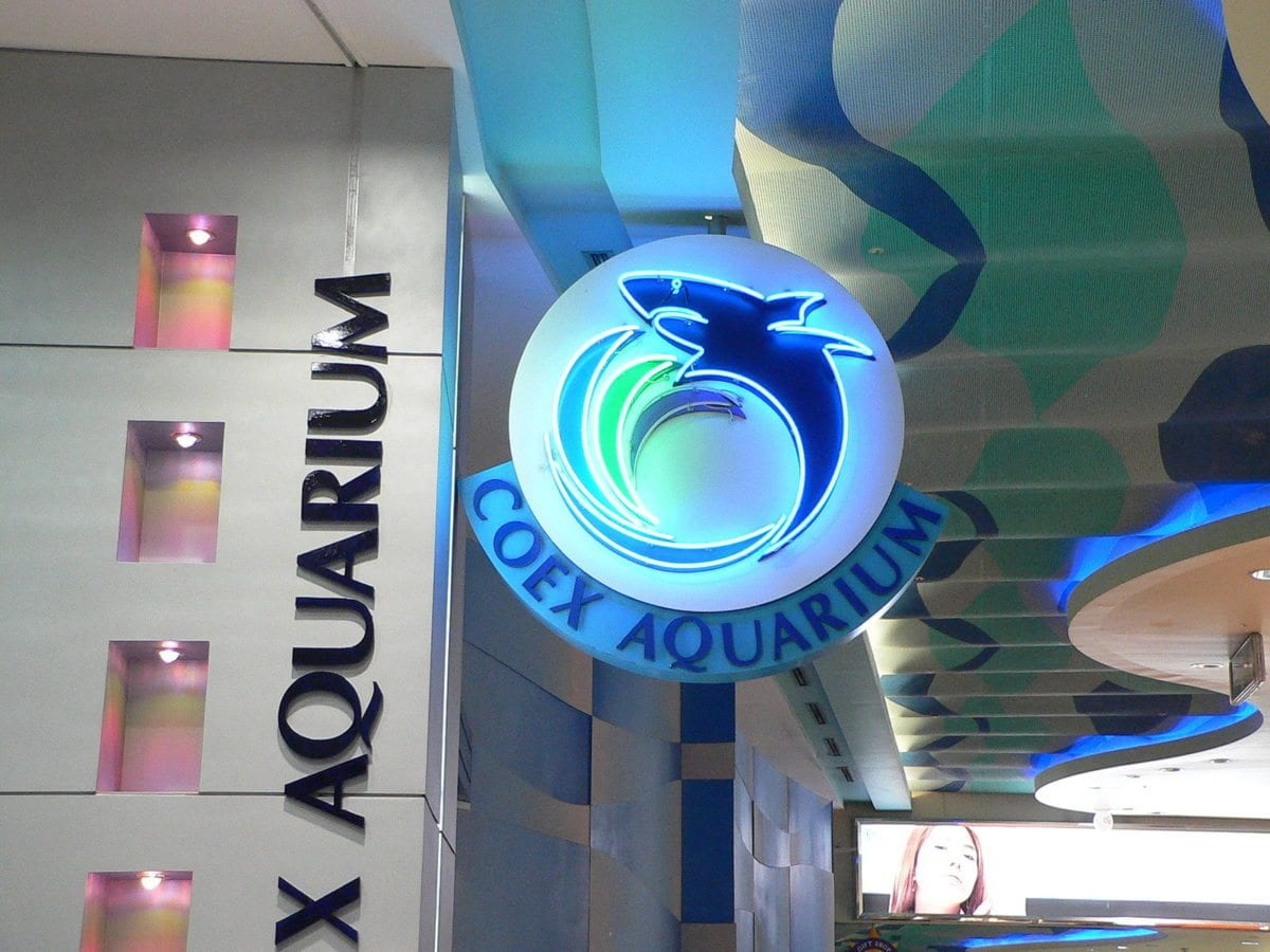 COEX Aquarium - aquariums in korea