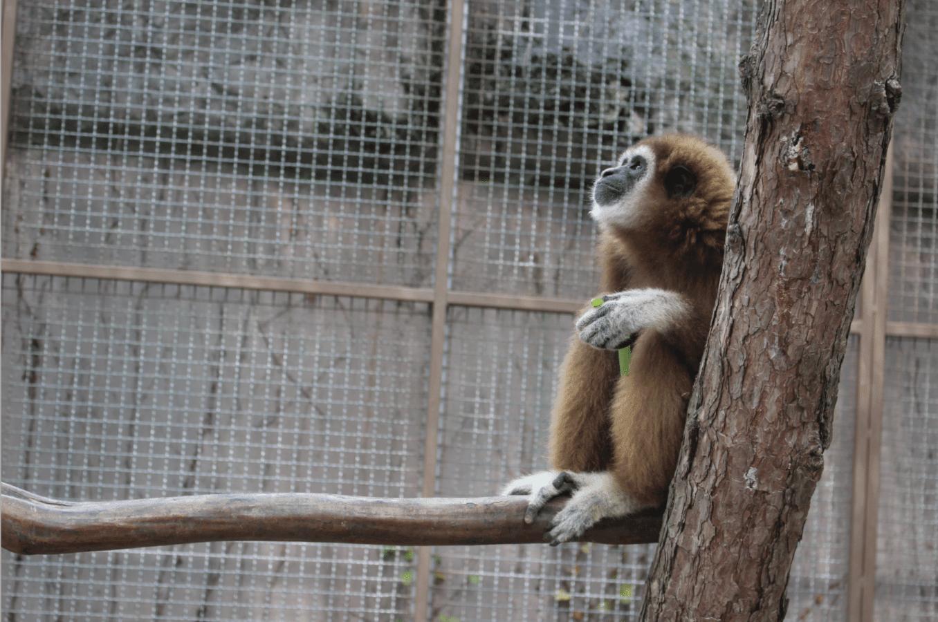 5 Fascinating Zoos to Visit in Korea | 10 Magazine Korea