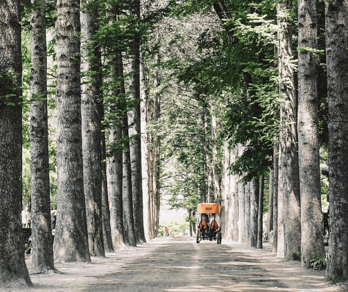 nami island gapyeong