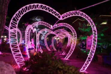 pocheon herb light festival heart valentine