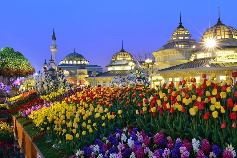 things to do in seoul korea april everland tulip festival