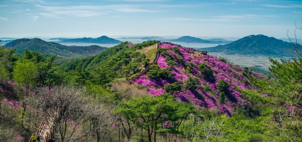 things to do in seoul korea april goreyosan moutain azalea festival 2019