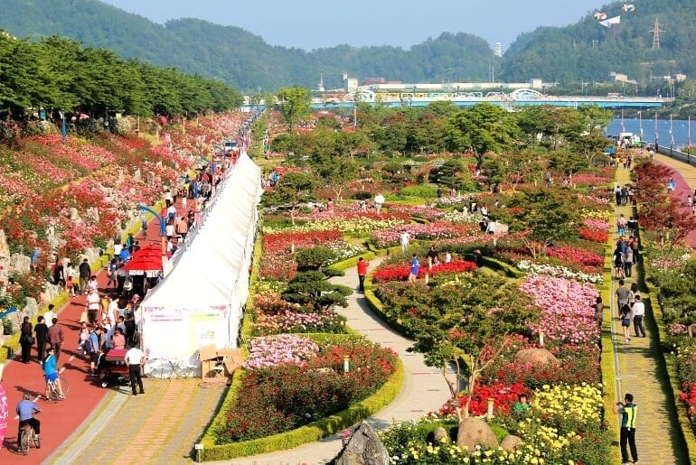 things to do in may korea samcheok rose festival 2019