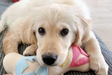 adopting a dog in korea