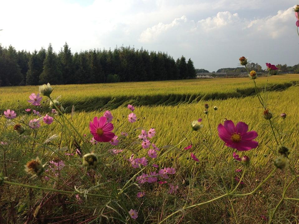 Korean countryside