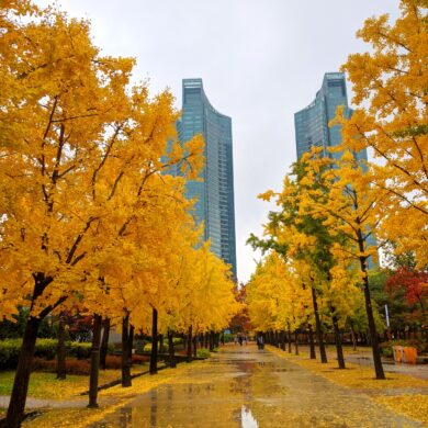 Exciting Things to do in Seoul During Fall