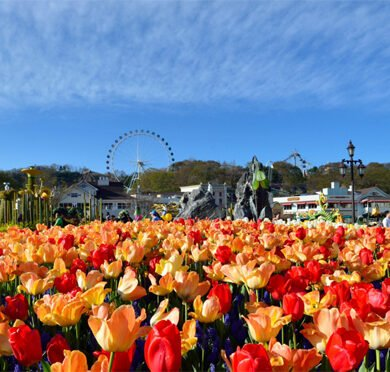 things to do in south korea in april